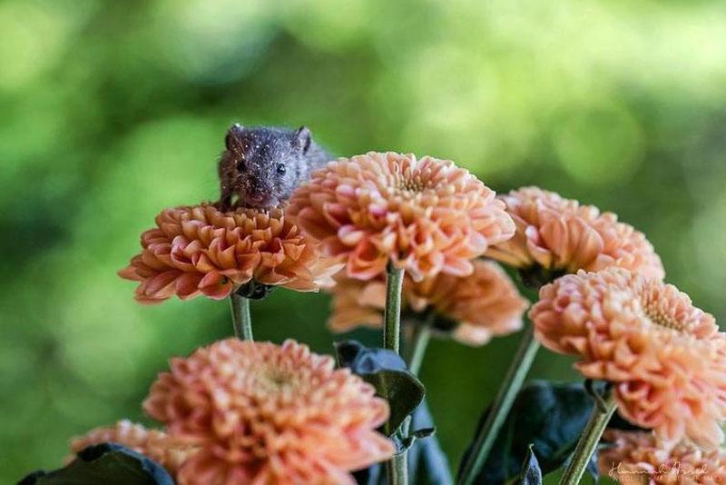 Мышонок Фридолин