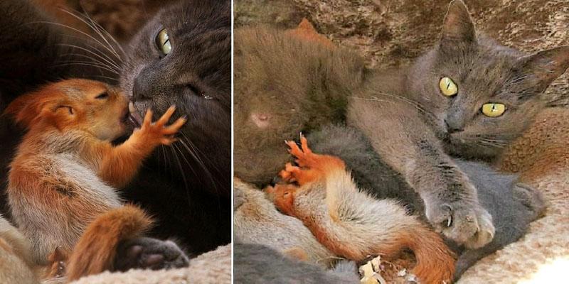 В Крыму кошка Пуша стала приемной мамой для бельчат