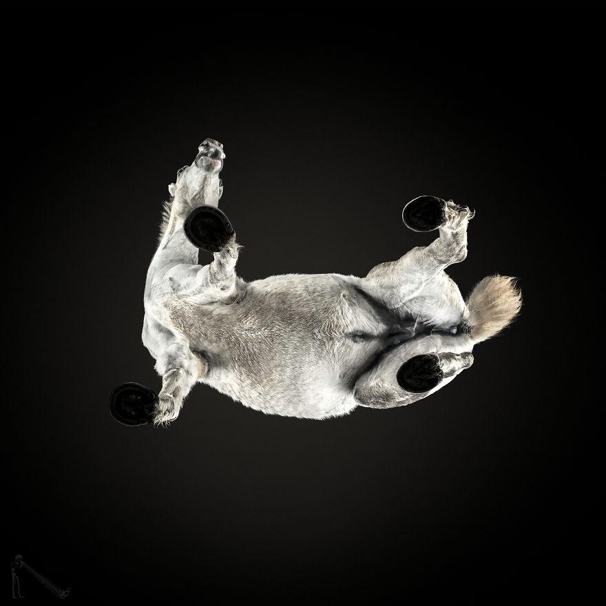 Фотографии лошадей снизу от Андрюса Бурбы