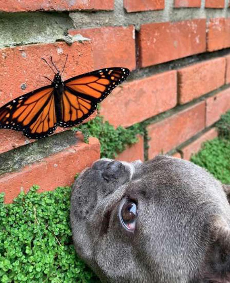 Щенок и бабочка