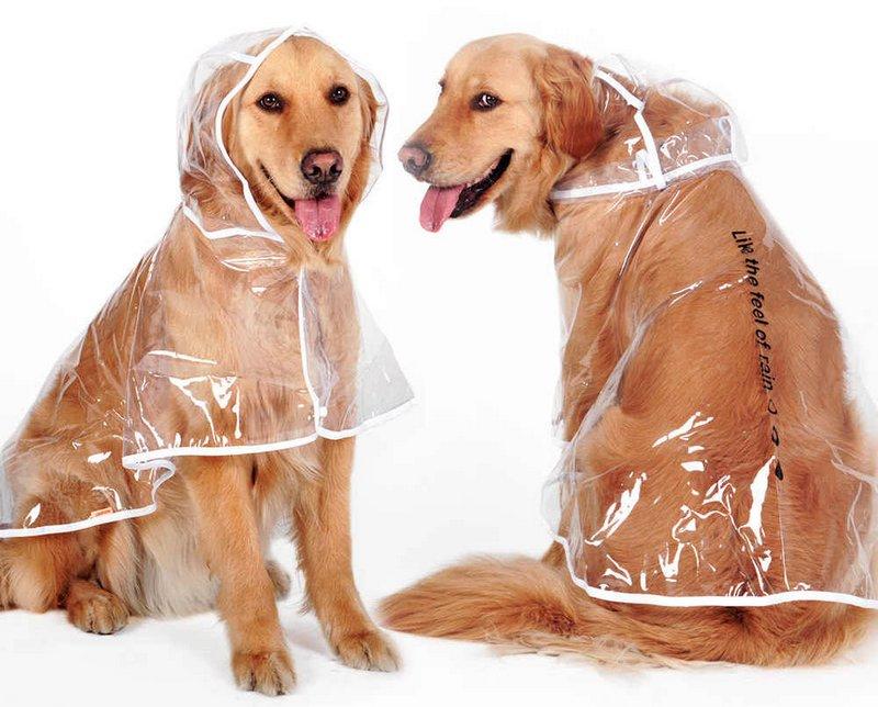 Собаки в пластиковом пончо