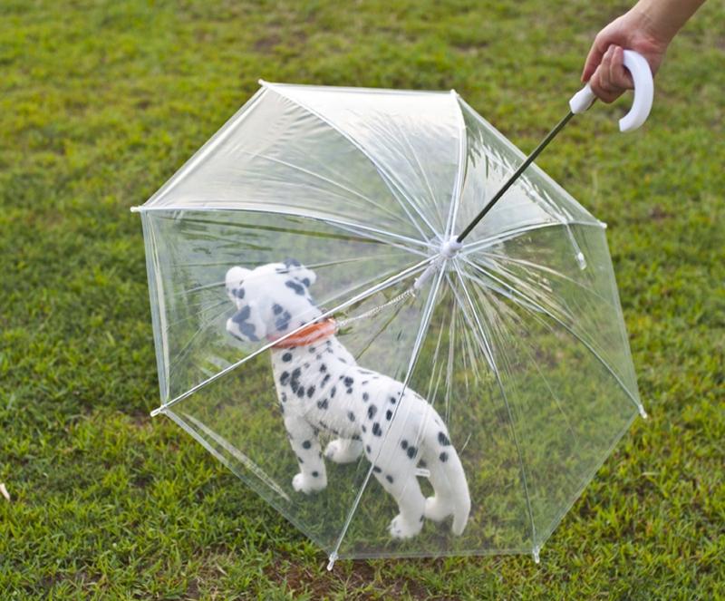 Зонт для собаки