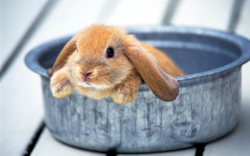 Особенности поведения кролика