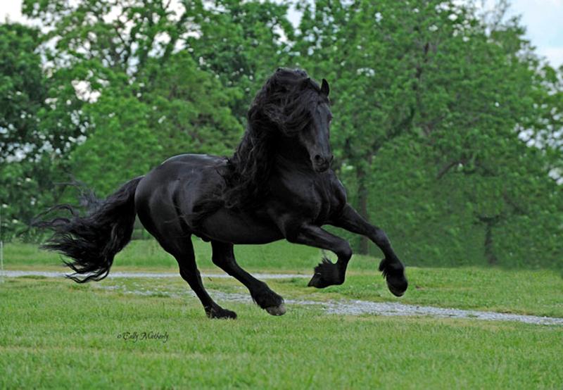 Конь по кличке Фредерик Великий