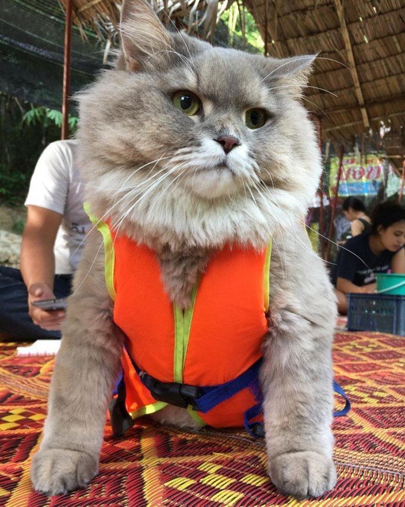 Сверхпушистый котик Бон Бон