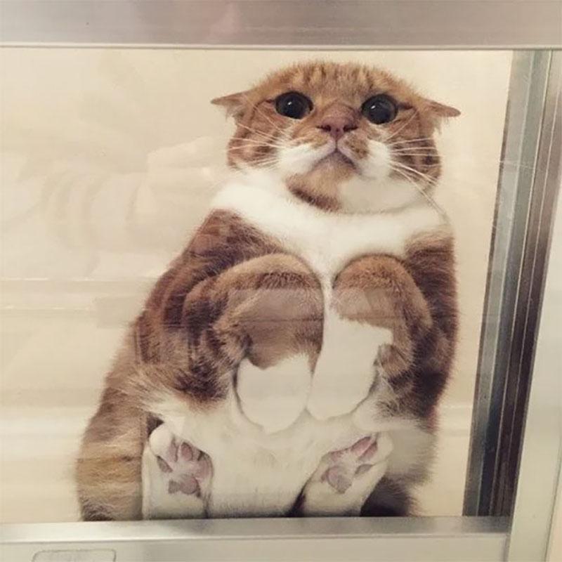 Кошка на стеклянной полочке