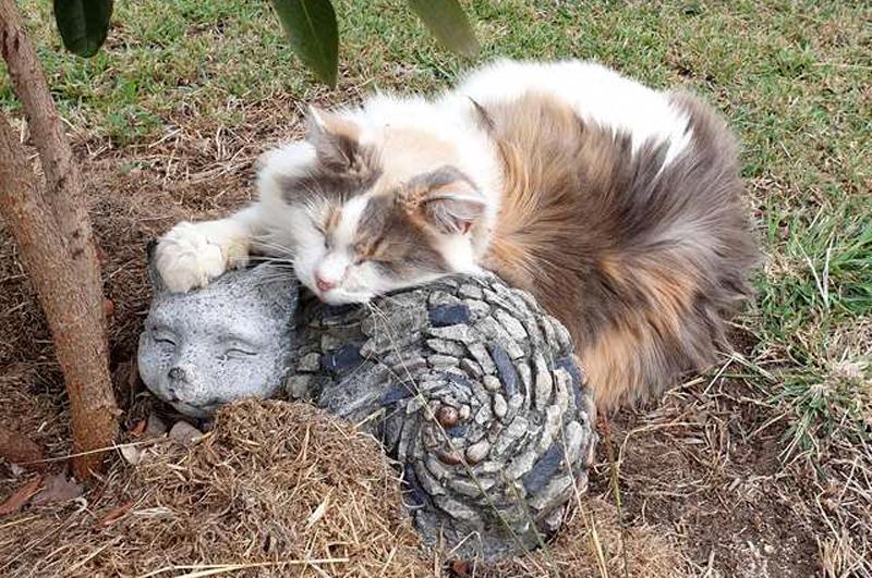 Кошка Бэби