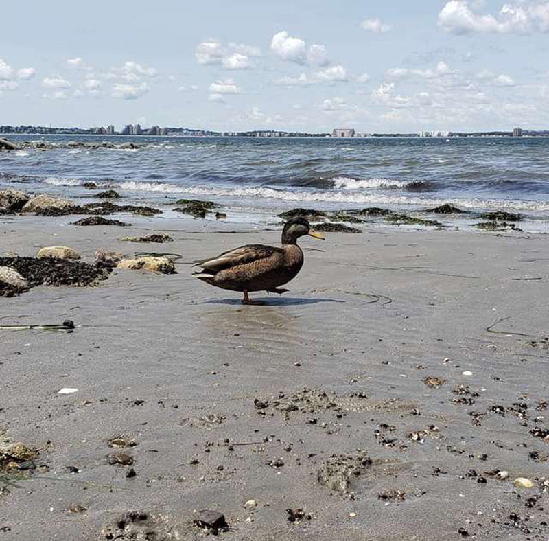 Черио на пляже