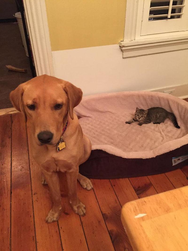 Кошки и собачьи лежанки