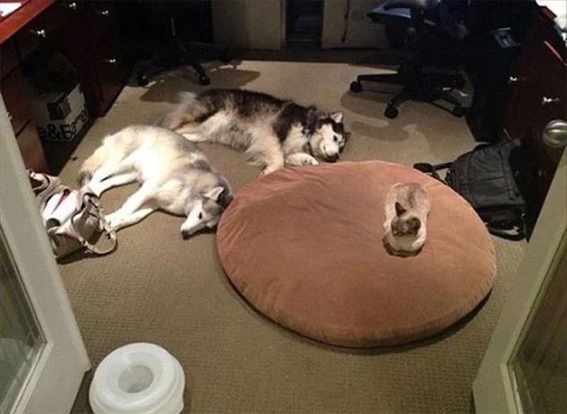 Кошки и собачьи лежаки