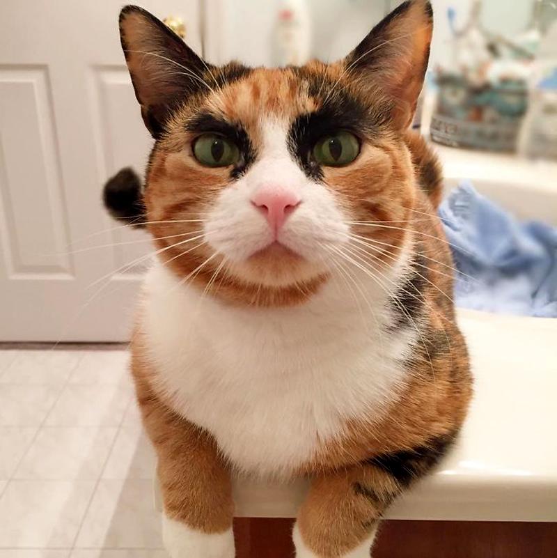 Лили — кошка с харизматичными бровями