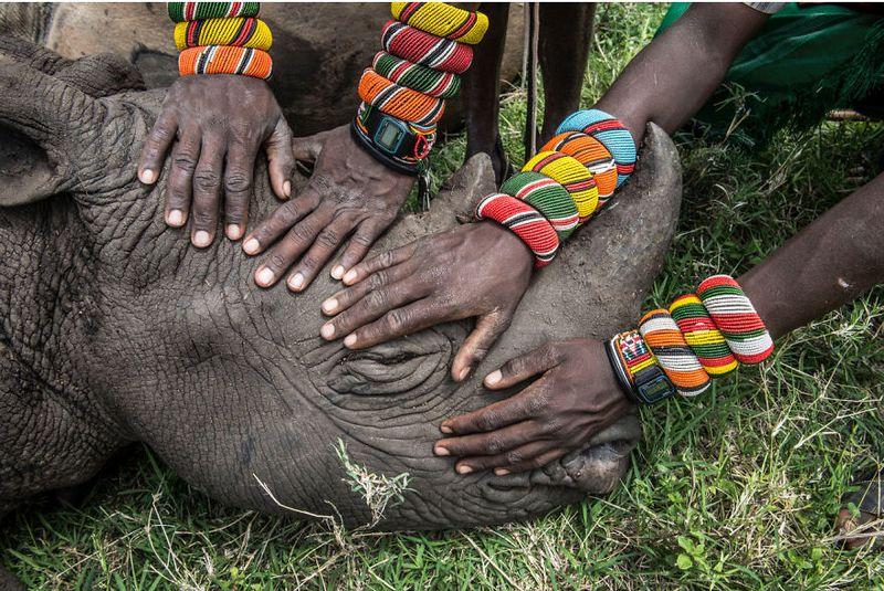 Народ самбуру на страже дикой природы Кении