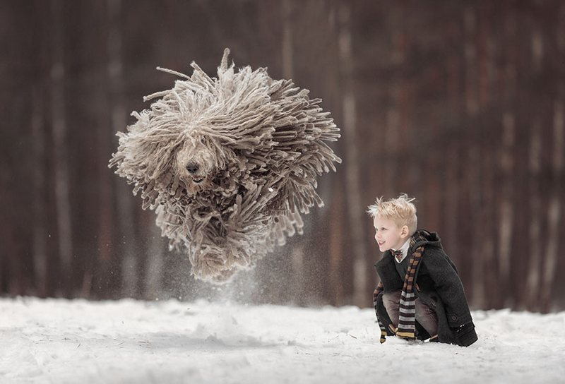 Летящая собака командор от фотографа Эдуарда Селивестрова