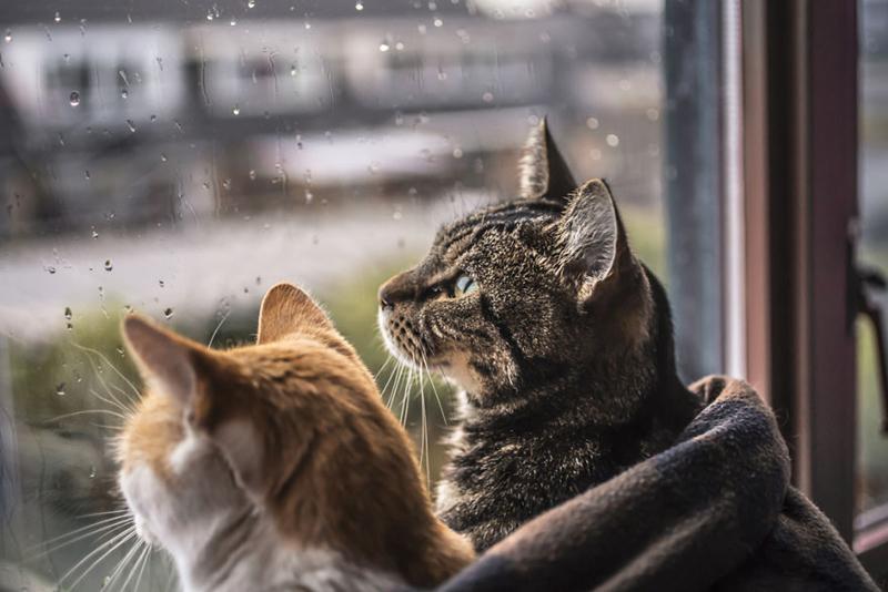 Кошки фотографа Фелисити Берклиф