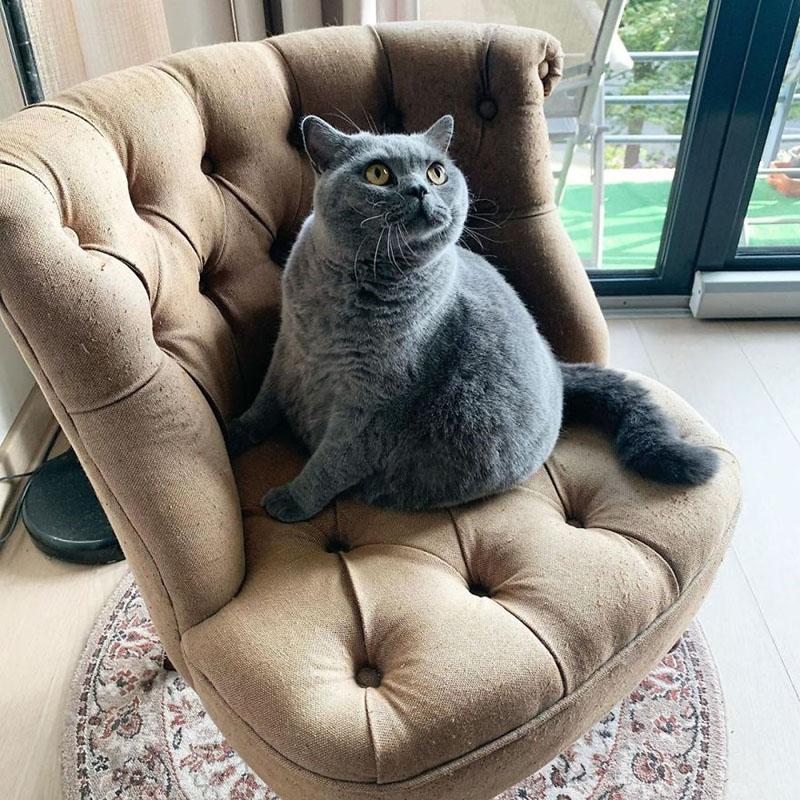 Кошка со сколиозом Пито