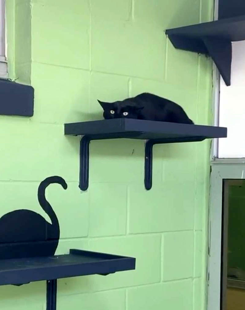 Хитрый кот находит идеальное место, чтобы спрятаться