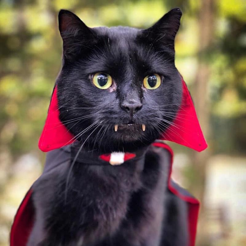 Кот Монк с вампирскими клыками