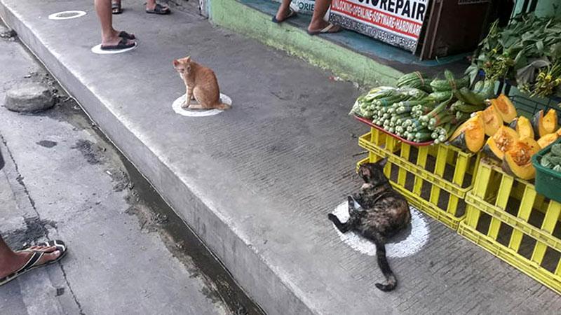 Кошки и социальное дистанцирование