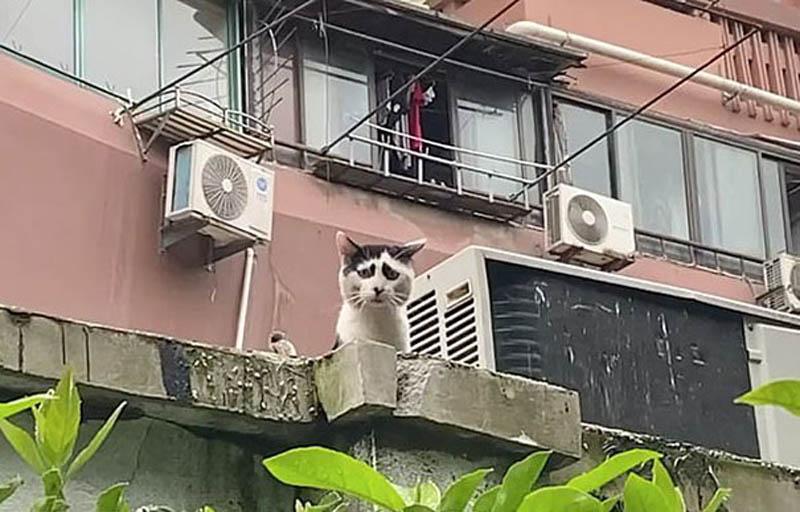 Могги — кошка с необычным окрасом
