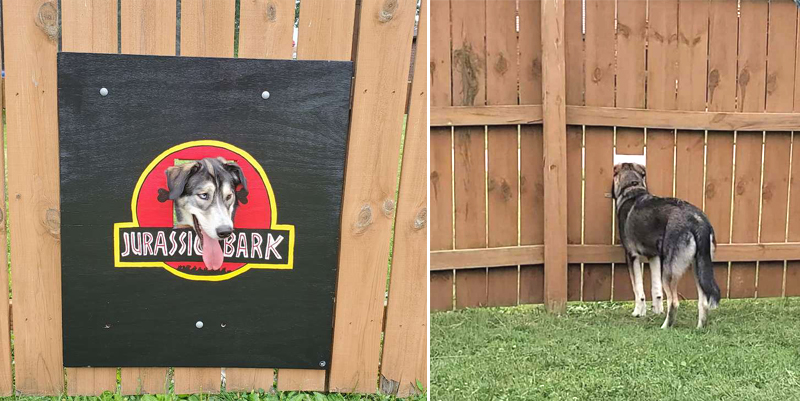 Селфи с забором, картиной и собакой