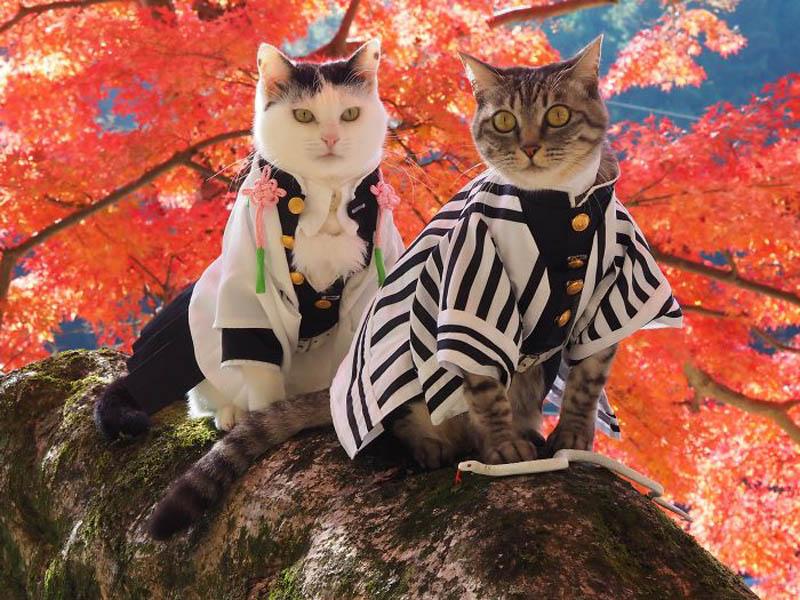 Коты в костюмах аниме