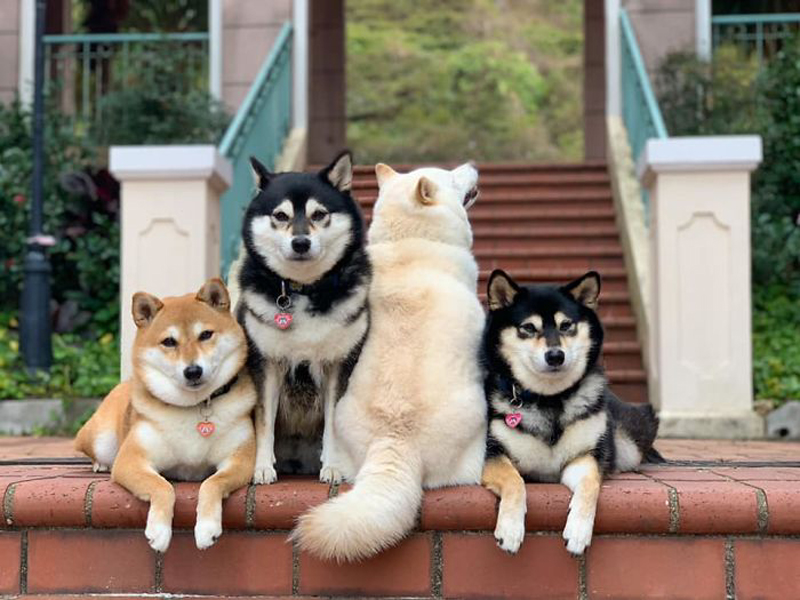 Когда Кикко, Саша, Момо за, Хина всегда против