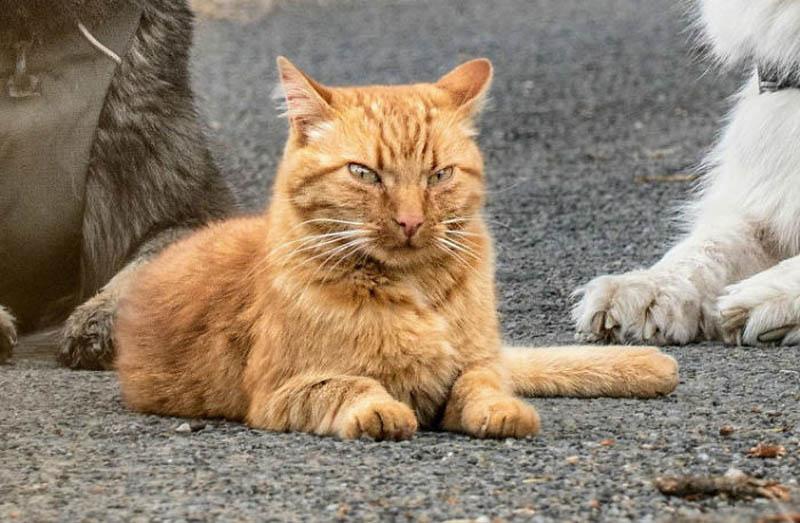 Азмаэль – кот, который считает себя собакой