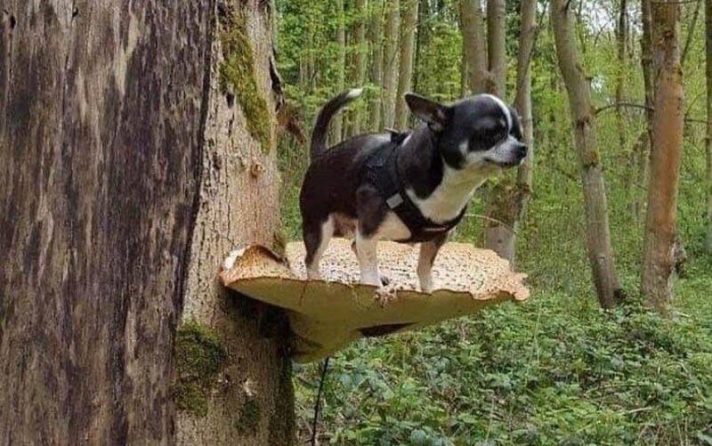 фотографии собак на грибах