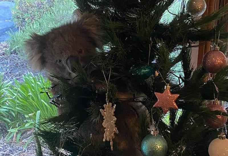 Коала на рождественской елке