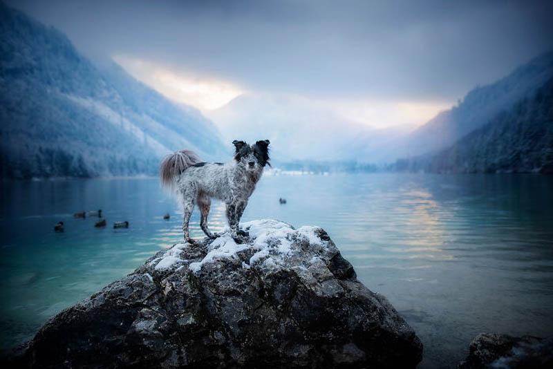 Собаки и природа на снимках австрийского фотографа Энн Гейер