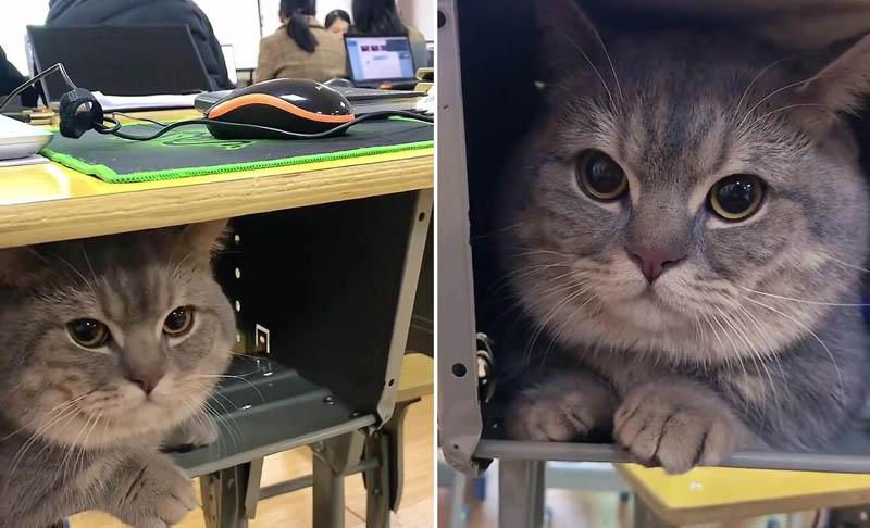 Китайская студентка тайком приносит в аудиторию своего кота