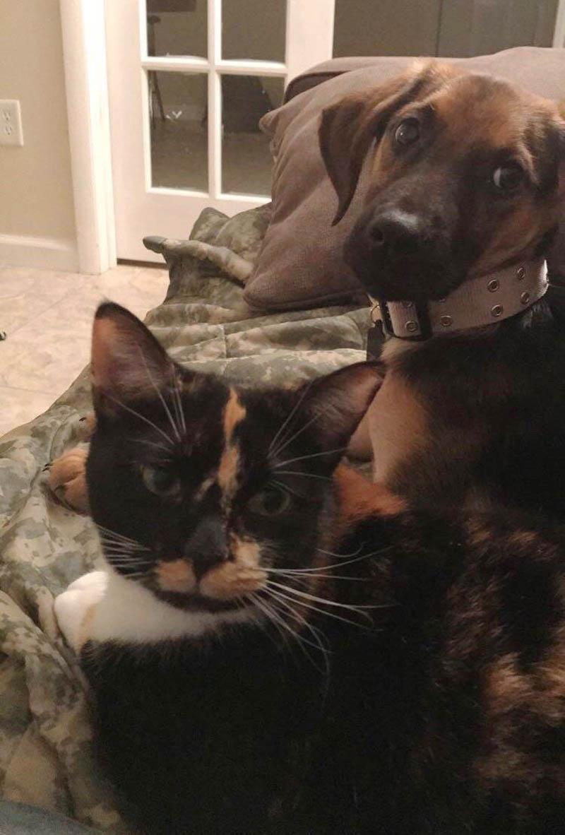История о кошке Барб и человеке, который не хотел кошку