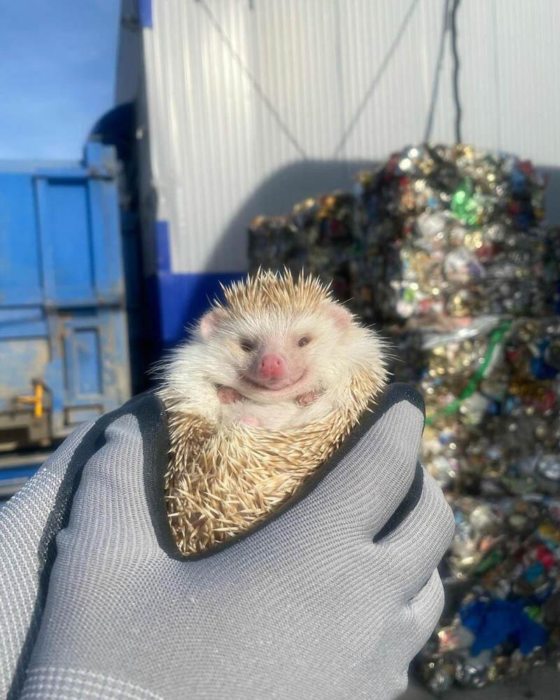 Спасение кота из мусорного пакета