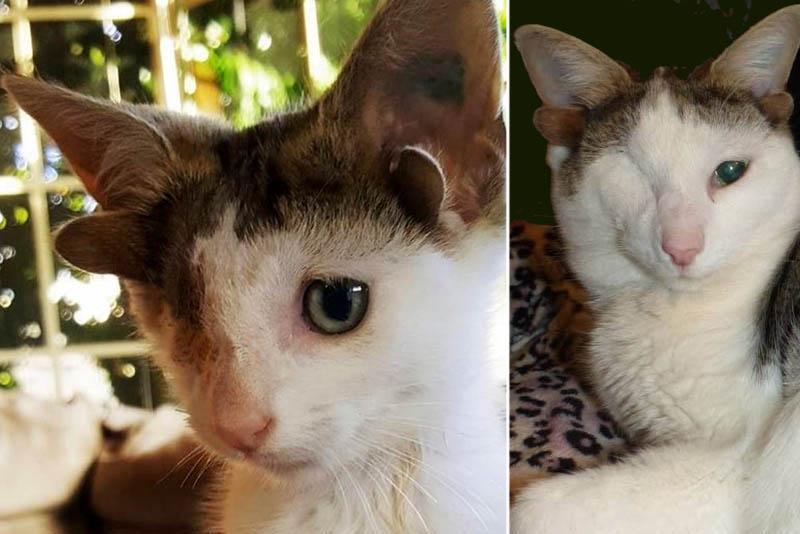 Одноглазый четырехухий кот Фрэнки