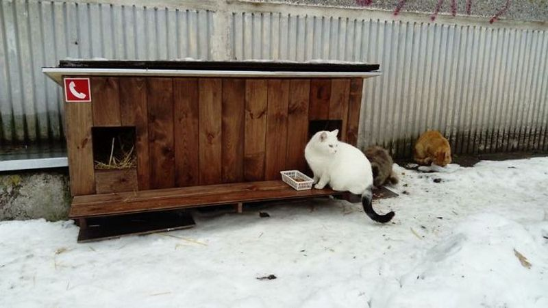 Домик для бездомной кошки
