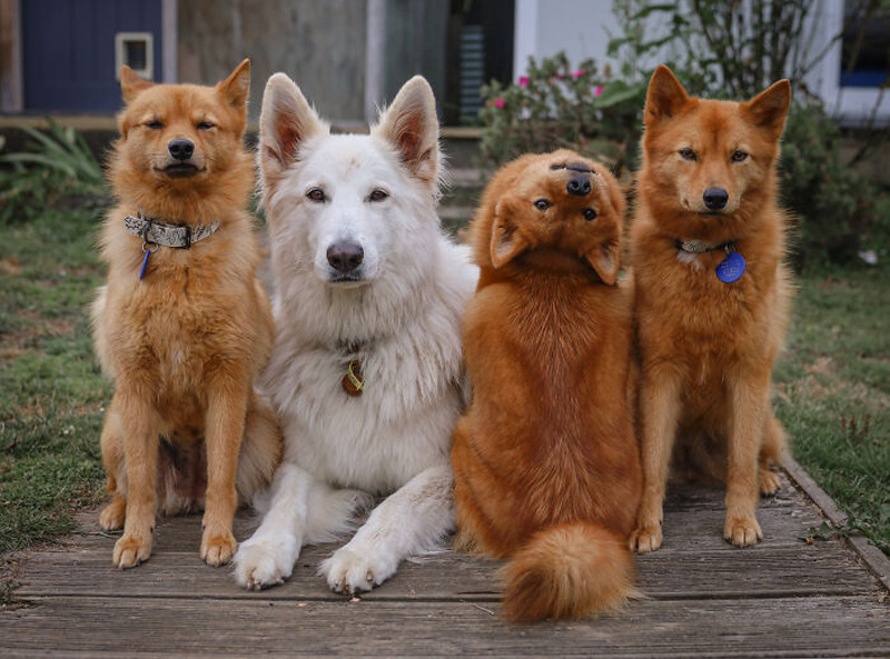 Кико и ее товарищи