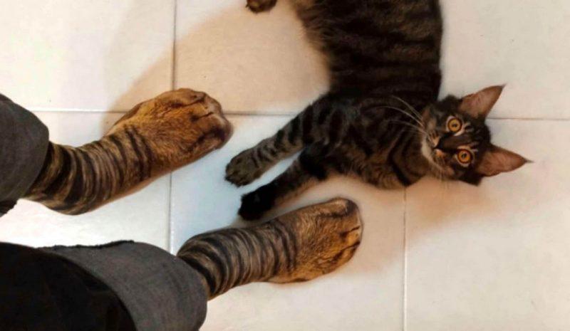 Кошки и носки с принтом «кошачьих лапок»