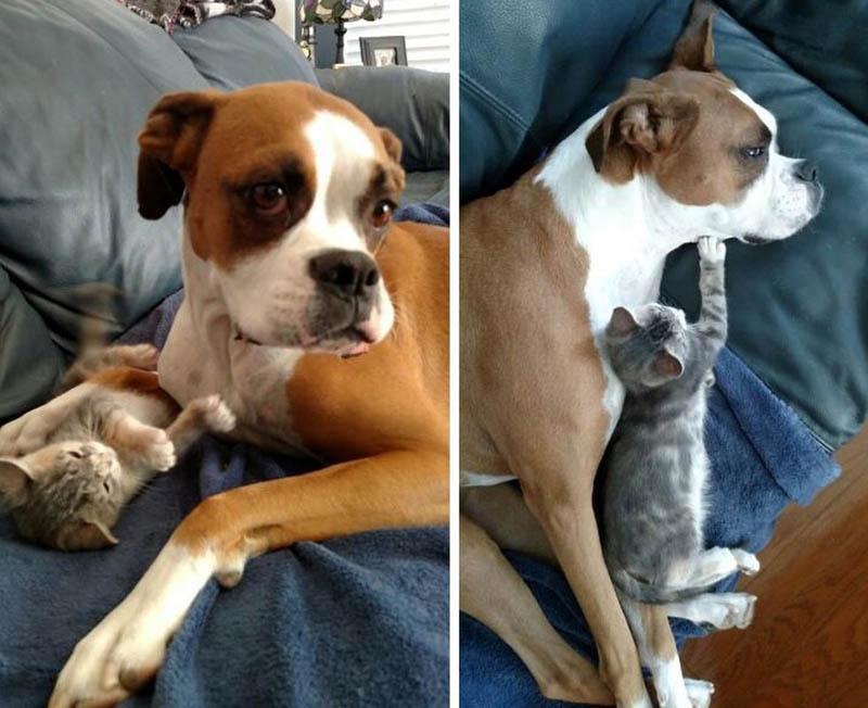 Уиллоу – очаровательная кошка с хромосомной аномалией
