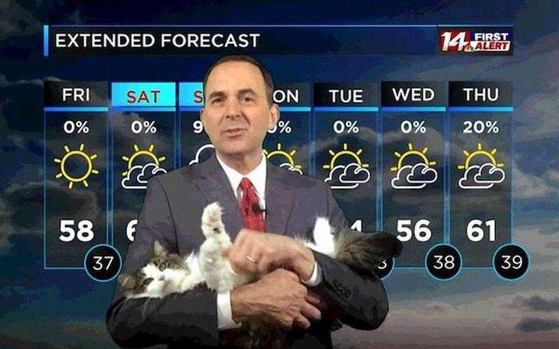 Кошка Бетти из телевизионного прогноза погоды