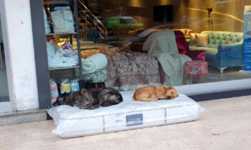 Стамбул: мебельный магазин и бездомные собаки