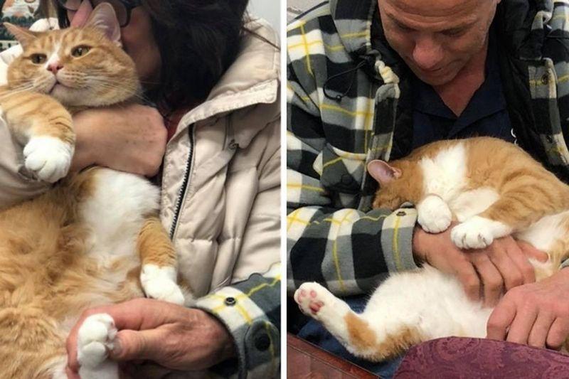 Слишком ласковый кот Жак