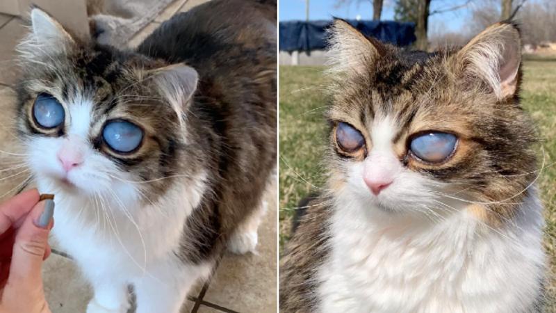 Слепой кот Пико – волшебный взгляд туманных глаз