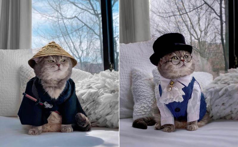 Кот-модель по кличке Бенсон