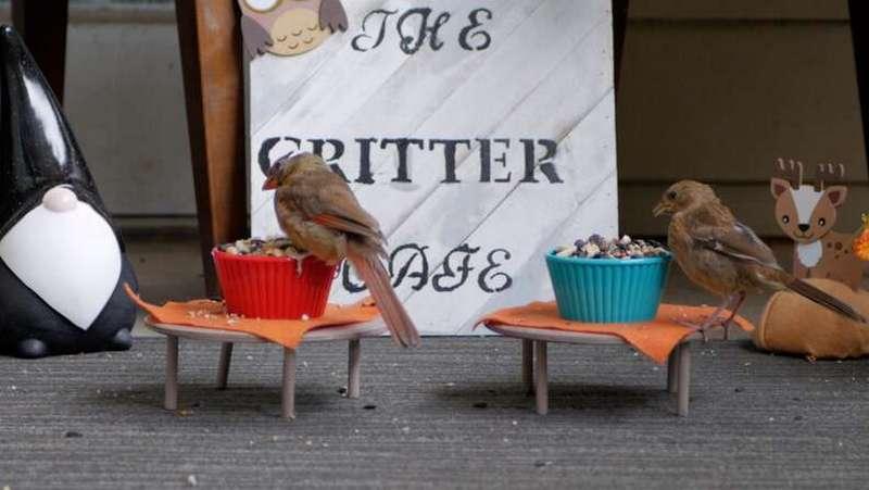 Миниатюрное кафе для птиц и белок