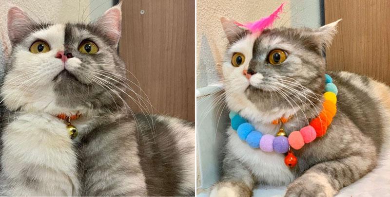 Двуликая кошка по кличке Кошка