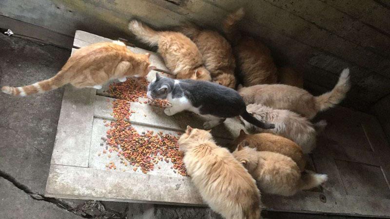 Пара покупает старый фермерский дом с целой стаей кошек