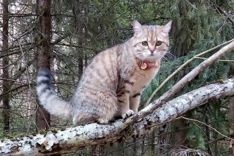 Кошка Мисс Норрис