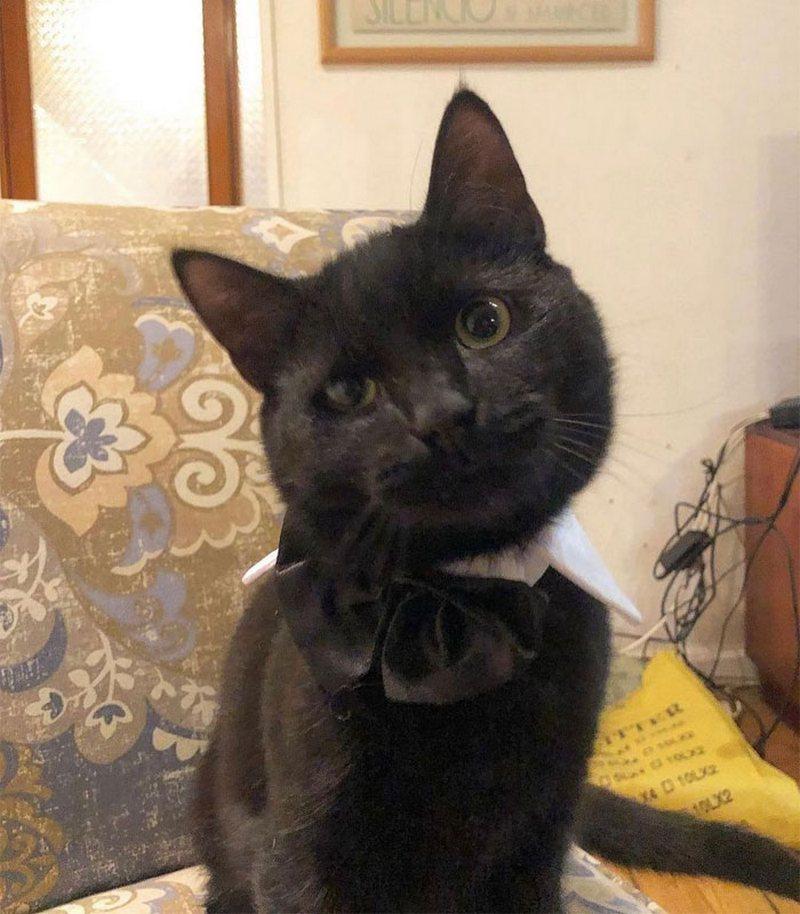 Сайман — кот, который подружился с мышью