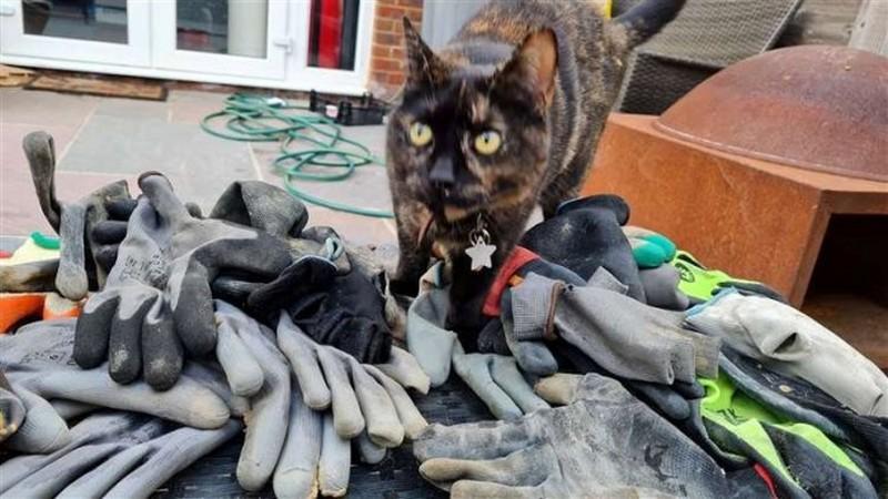 Кошка Чай и перчатки