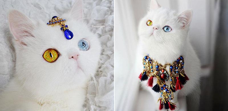 Кошка Пэм Пэм - звезда Instagram